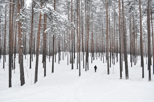 forest-trees-snow