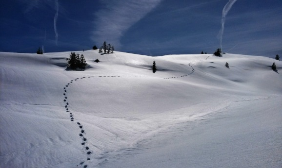 footprints-in-snow_pexels