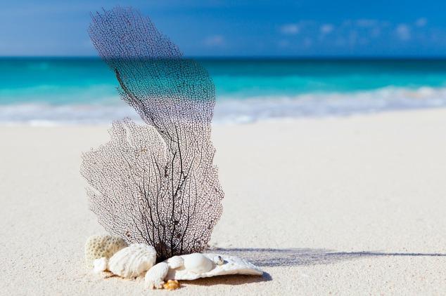 beach_publicdomainpictures