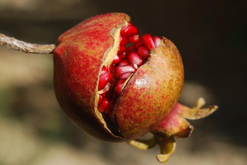 pomegranate_LeeTravathan
