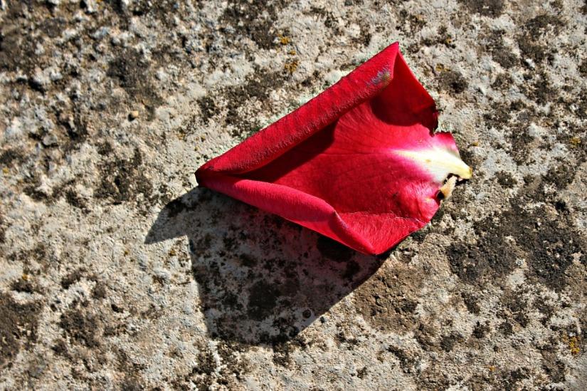 rose petal red_malubeng